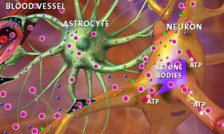 brain-cell3-450x269