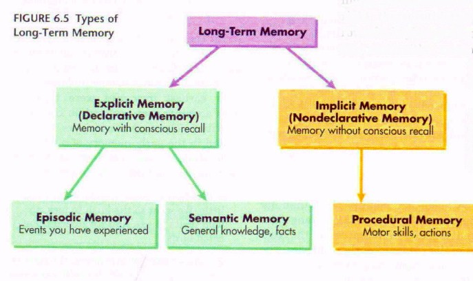 the difference between stm and ltm Together, these findings demonstrate that all of the different stages of memory  formation involved  conversion of a labile short-term memory (stm) into a  lasting  dated ltm is reactivated before amnesia-evoking treatments.