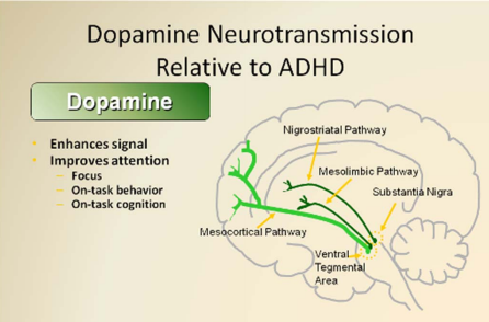 dopamine hypothesis history The anhedonia hypothesis -that brain dopamine plays a critical role in the subjective pleasure associated with positive rewards - was intended to draw the attention of psychiatrists to the.