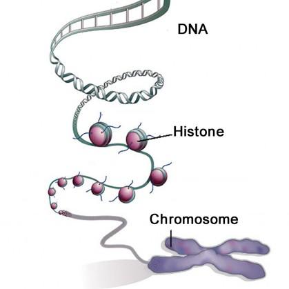 Figure-1-Histones-1024x1022