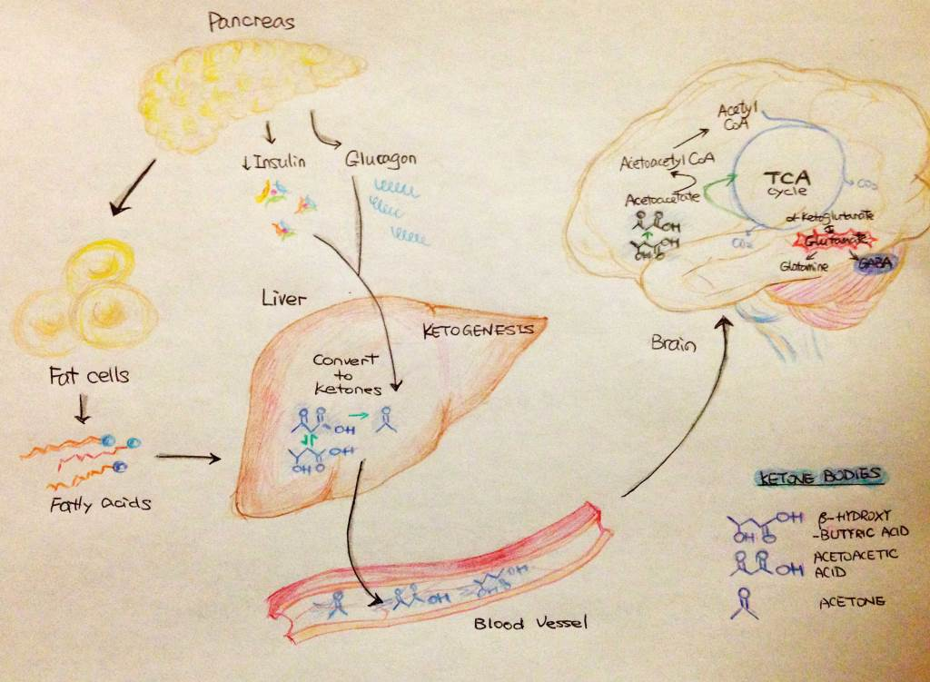 Brain on ketones energetics oxidation and inflammation